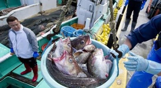 Los pescadores de Fukushima no se rinden