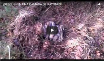 ¡DESCUBREN UNA CAMADA DE RAYONES!