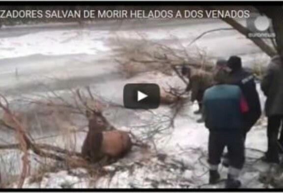 CAZADORES SALVAN DE MORIR HELADOS A DOS VENADOS