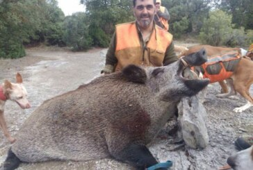 Jabalí de casi 140 kg capturado en Sierra de Badaia