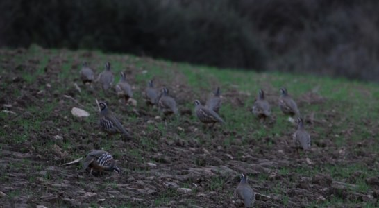 Los cazadores navarros expresan malestar por los intentos de disminuir los días de caza de la perdiz