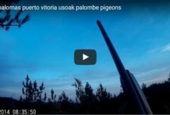 Pasa palomas en el coto de la Federación Alavesa de Caza