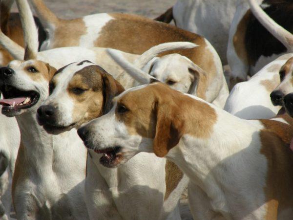 Los cuidados de los perros durante los días de calor