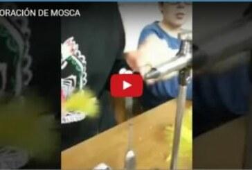 ELABORACIÓN DE MOSCA