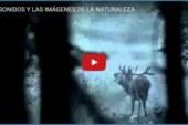 LOS SONIDOS Y LAS IMÁGENES DE LA NATURALEZA