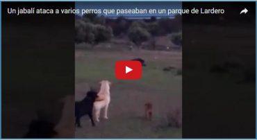 Un jabalí ataca a varios perros que paseaban en un parque de Lardero
