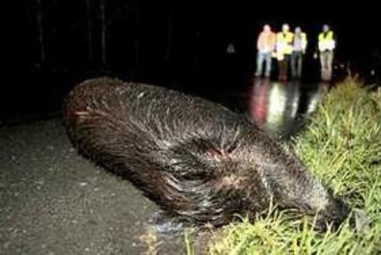 ADECANA pide soluciones para prevenir los accidentes de tráfico con la fauna silvestre