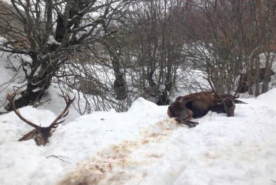 Los cazadores piden comida para la fauna ante las nevadas