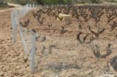 El conejo generó en la Ribera navarra pérdidas por valor de 1,1 millones