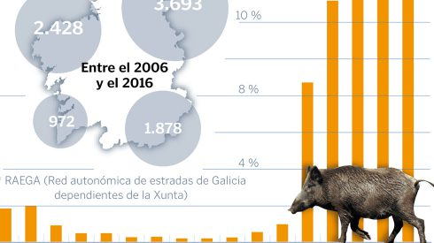 Los jabalíes causan 10 accidentes al día en Galicia
