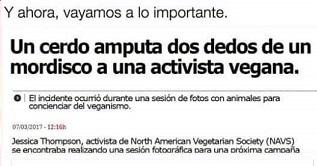 ¡Bienvenid@s a la realidad señores y señoras veganas! Los cerdos también comen carne