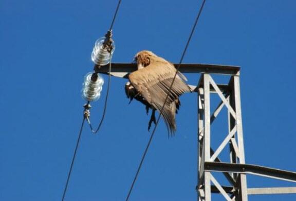 La ONC celebra que el Gobierno regule la adaptación de las líneas de alta tensión para la protección de la avifauna