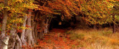 Hoy es el día internacional de los bosques