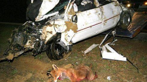 Gobierno de la Rioja apoya a los cotos con 38.000€ para suscribir seguros de accidentes de tráfico provocado por fauna silvestre