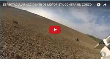 ESPECTACULAR ACCIDENTE DE MOTORISTA CONTRA UN CORZO