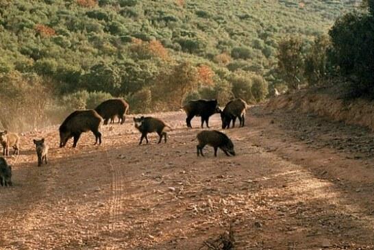 Viniegra de Abajo subasta lotes de caza mayor