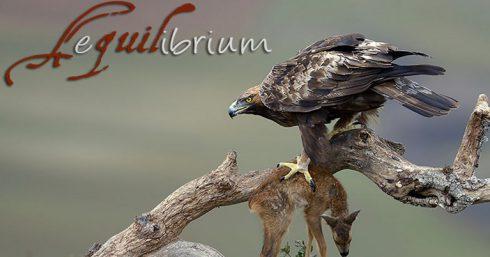 El águila real es un aliado en la gestión del corzo