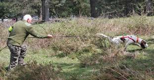 ADECANA propone regular el uso de perros de rastro con traílla en Navarra