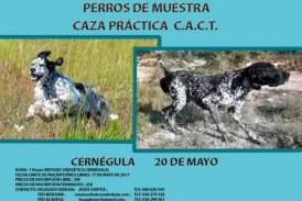 CAMPEONATO DE ALAVA-BIZKAIA-GIPUZKOA DE PERROS DE MUESTRA CAZA PRACTICA C.A.C.T