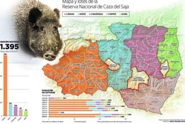 1.395 jabalíes cazados: La tercera mejor temporada de su historia