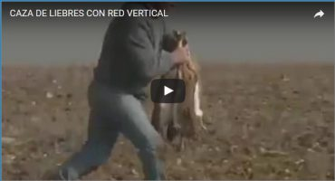 CAZA DE LIEBRES CON RED VERTICAL