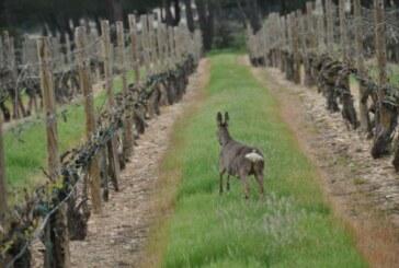 La Rioja: Cultivos o despensa para la caza mayor