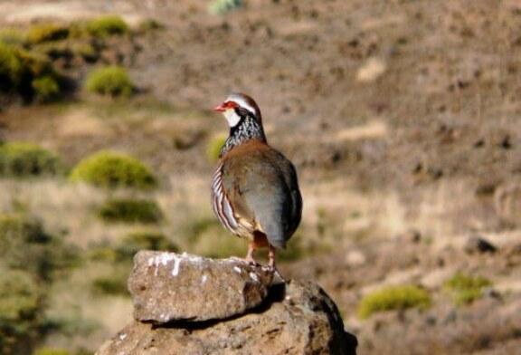 Fedexcaza y Artemisan plantean al presidente de la Diputación de Badajoz un proyecto para recuperar la fauna menor