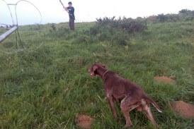 Foto del día: Cazando codornices con arco