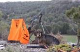 ADECANA hace una valoración de la caza y la gestión del gobierno de Navarra