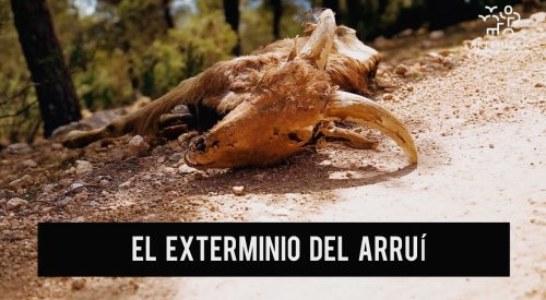 Fundación Artemisan solicita al Gobierno de Murcia el contenido íntegro del plan de medidas para erradicar al arruí en Sierra Espuña