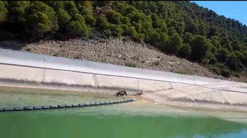 Los bomberos rescatan un jabalí en el Canal de Navarra