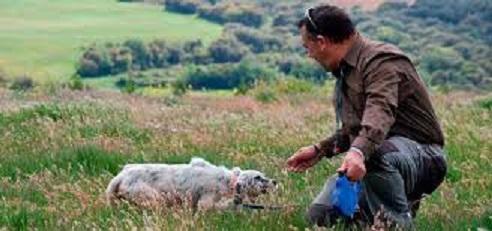 El perro requiere preparativos y cuidados específicos de cara a la próxima media veda