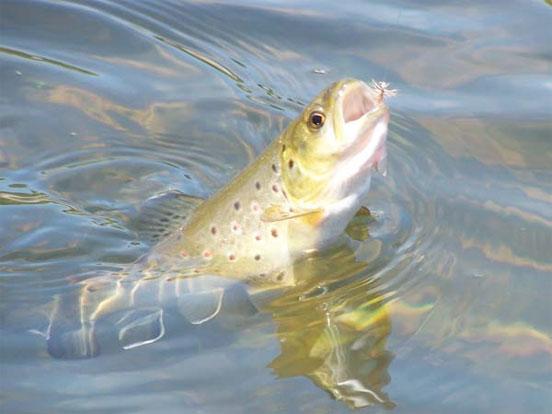 ¿Es compatible la pesca tradicional y la pesca sin muerte?