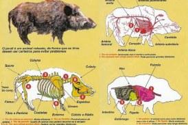 Foto del día: Anatomia del jabalí