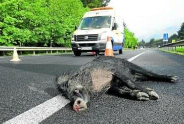Cada día se produce en Álava un accidente de tráfico por fauna silvestre