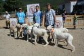 Arrecal denuncia la esterilización de las rehalas deportivas que propone el Gobierno de Castilla La Mancha
