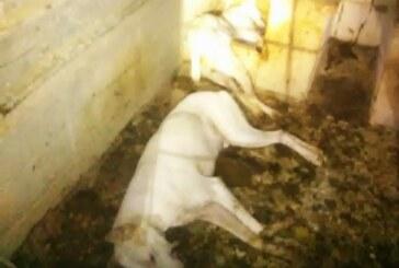 Carta abierta de la familia rehalera Seara Pinedo, víctima del envenenamiento de 40 perros