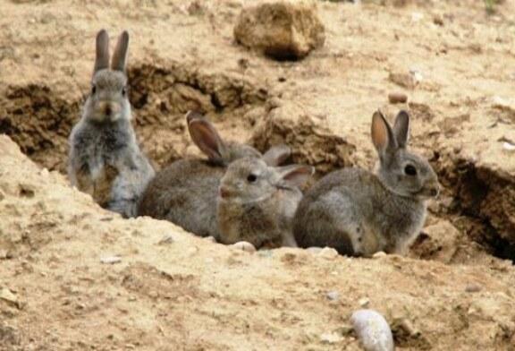 ¿Por qué le gustan a los conejos los márgenes de las autopistas?