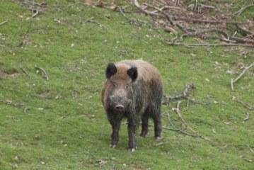 La temporada de caza mayor permite disponer de carne de excelente calidad