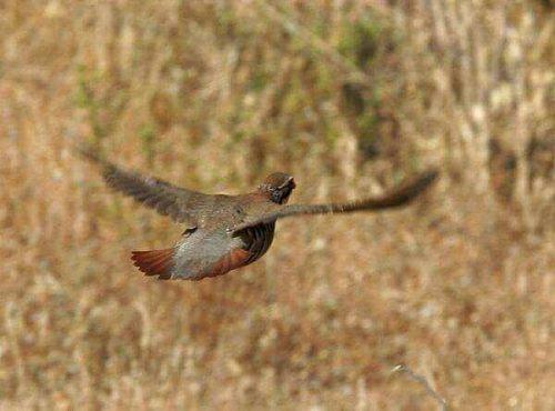 Navarra: Problemas entre la administración y cazadores por la gestión de la perdiz roja