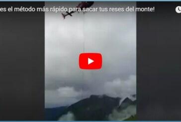 ¡Este es el método más rápido para sacar tus reses del monte!