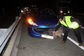 Alava: La Diputación se responsabiliza de un accidente con un jabalí