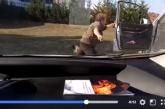 Alava: Jabalí ataca a guardas que le rescatan de un estanque. Ver vídeo