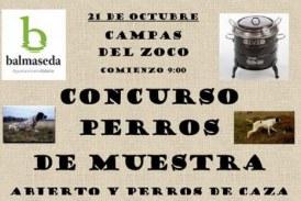 Bizkaia: 21 de octubre Concurso de perros de muestra en Balmaseda