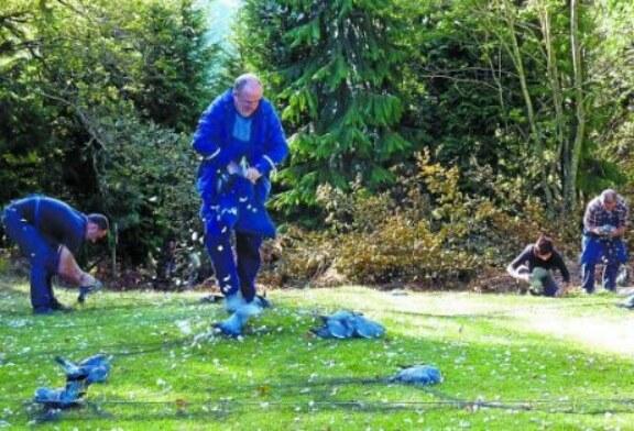 Navarra: Las redes de Etxalar superan las 54 docenas de palomas