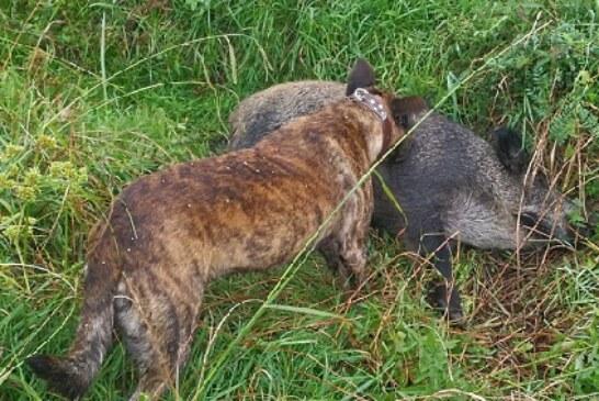 Bizkaia: Arriandi (Iurreta) punto peligroso de accidentes con especies cinegéticas. Ver vídeo interior