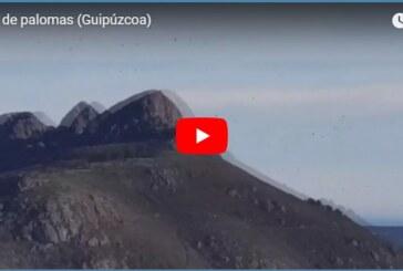 Gipuzkoa: Miles de palomas