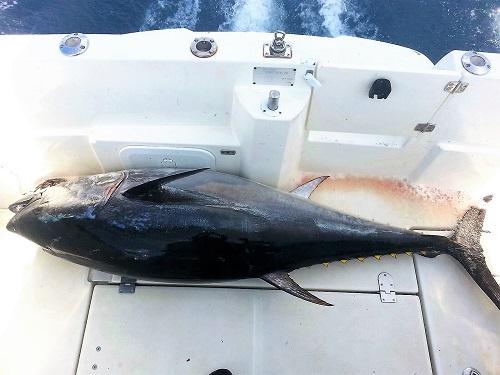 Recuperación del atún rojo de atlántico y pesca deportiva