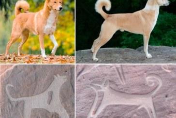 Prehistoria: Perros de caza domesticados en la Arabia de hace 10.000 años