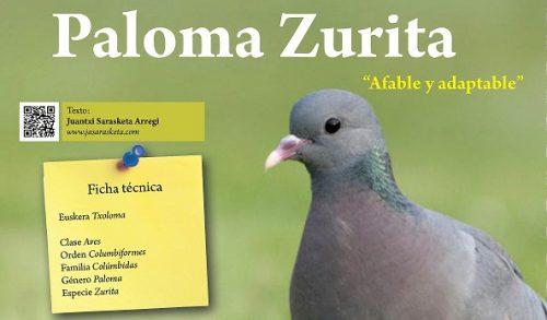 Cuaderno de Campo: Informacion sore la paloma zurita (txoloma)